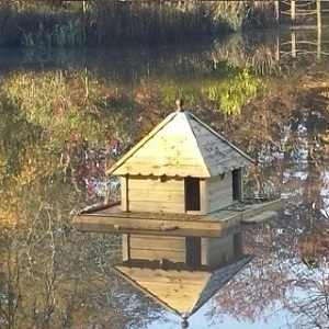 Duck, Waterfowl Houses and Runs