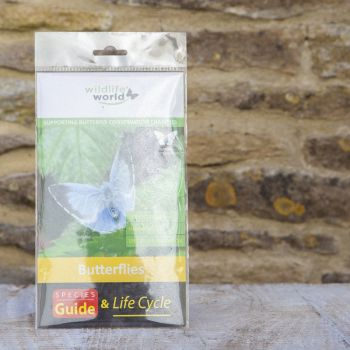 Mini Guide to Butterflies with Wildflower Seeds