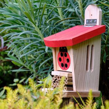 Ladybird & Insect Lodge